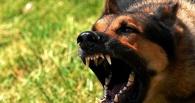 На Тамбовщине сократилось число случаев бешенства среди животных