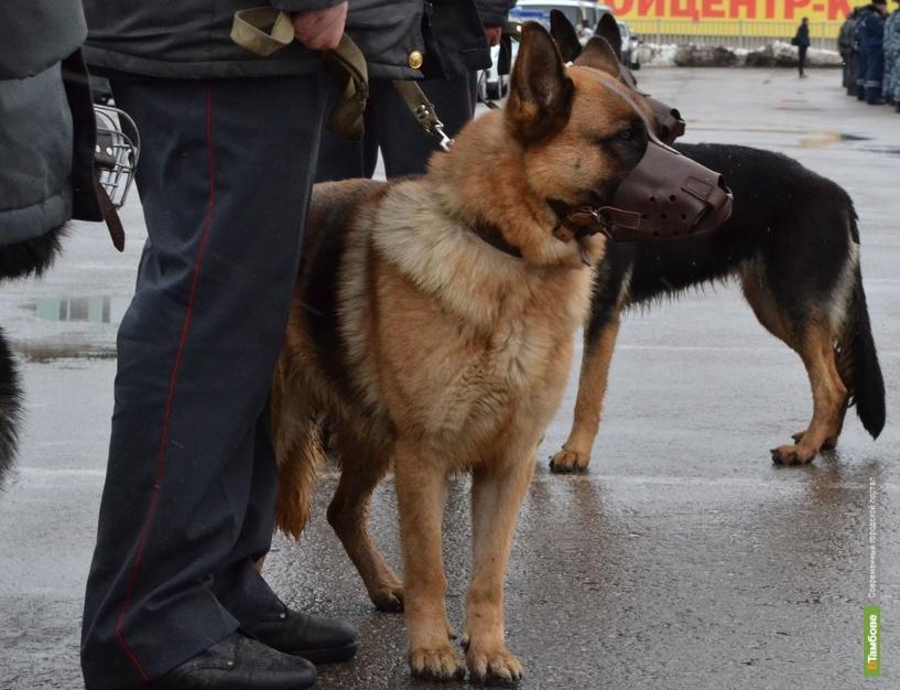 Уваровские полицейские поймали преступника «по горячим следам»