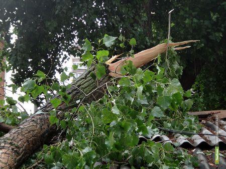 Тамбовский двор пострадал от вчерашнего урагана