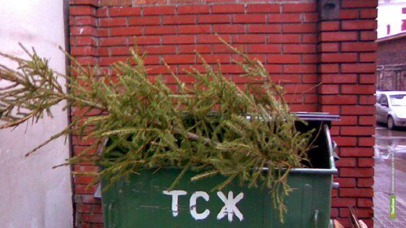 Тамбовский мусоросортировочный комплекс утилизирует елки