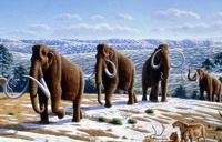 Правительство России скрывает от мира существование мамонтов
