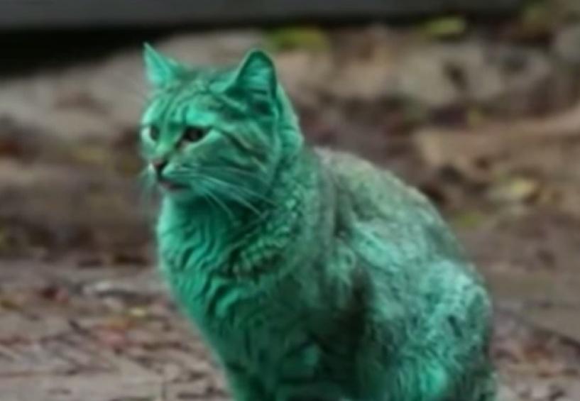 Усатый-изумрудно-полосатый: в болгарской Варне нашли зеленого кота