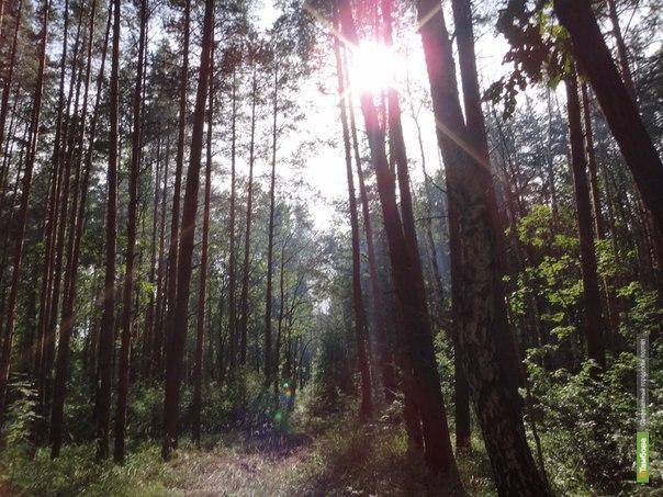 Жительница Инжавинского района два дня провела в лесу