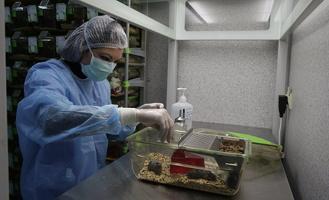 В МГУ создали препарат, замедляющий старение