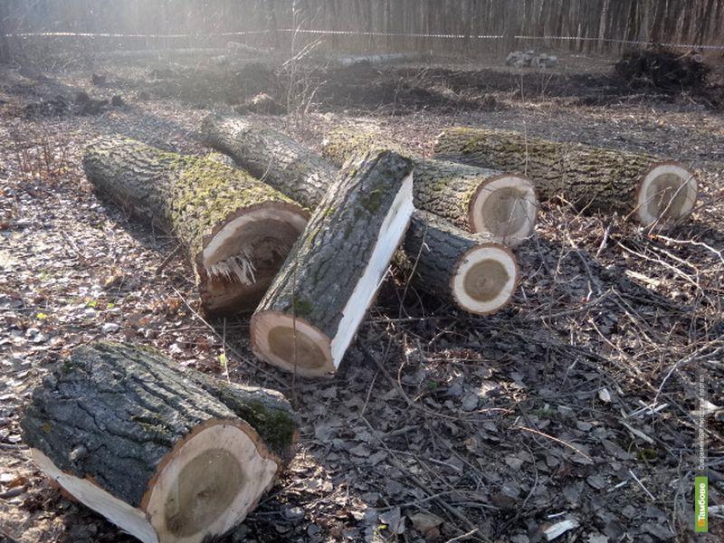 Тамбовские лесоводы в этом году заработали свыше ста миллионов рублей