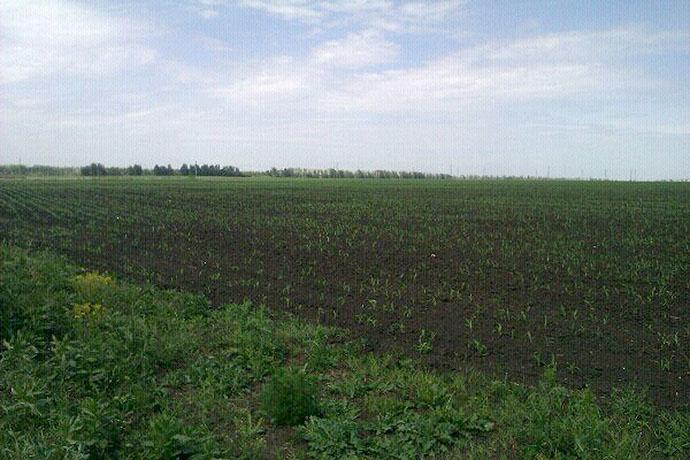 Участки многодетных семей в Майском засеяли кукурузой