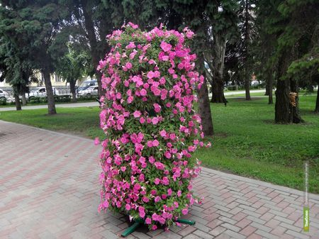 Тамбов украсят новые цветочные скульптуры