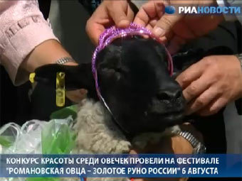 """В Ярославской области выбрали """"Мисс овцу"""""""