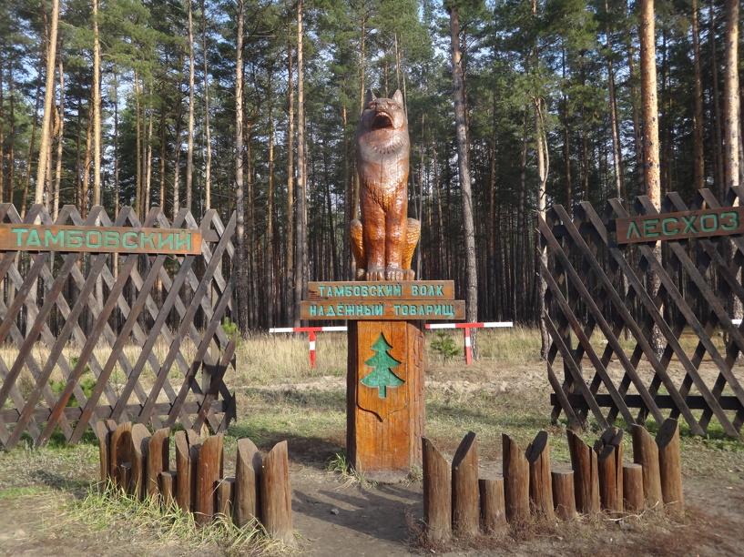 Депутаты Тамбова планируют запретить стройки на зеленых зонах