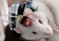 Ученые исследовали живой мозг мыши