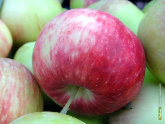 Тамбовских студентов отправили на сбор яблок