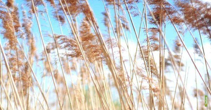 С тамбовских полей собрали 3 миллиона тонн зерна и 4 миллиона тонн сахарной свеклы