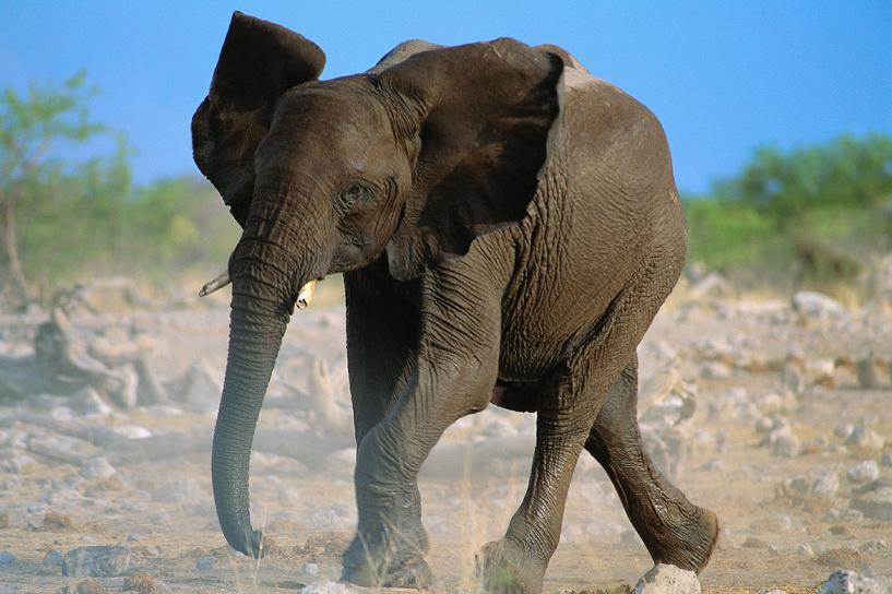 В Таиланде слон взбесился и унес в джунгли двух россиянок