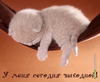 Выходные с ВТамбове.ру: кошки, женщины и Валера