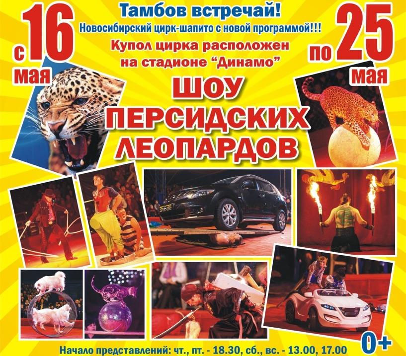 В Тамбове покажут шоу персидских леопардов