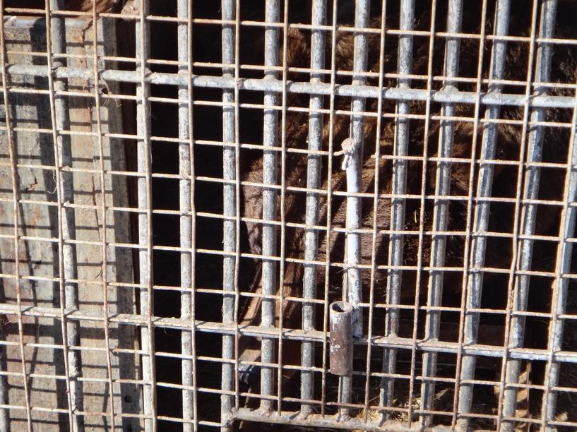 В зоопарке Тамбова животные проснулись от зимней спячки