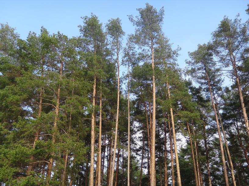На охрану, защиту и воспроизводство тамбовских лесов выделили 176 миллионов рублей