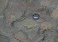 Британские ученые нашли следы первых европейцев