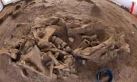 В Бельгии нашли останки древнего предка хищника