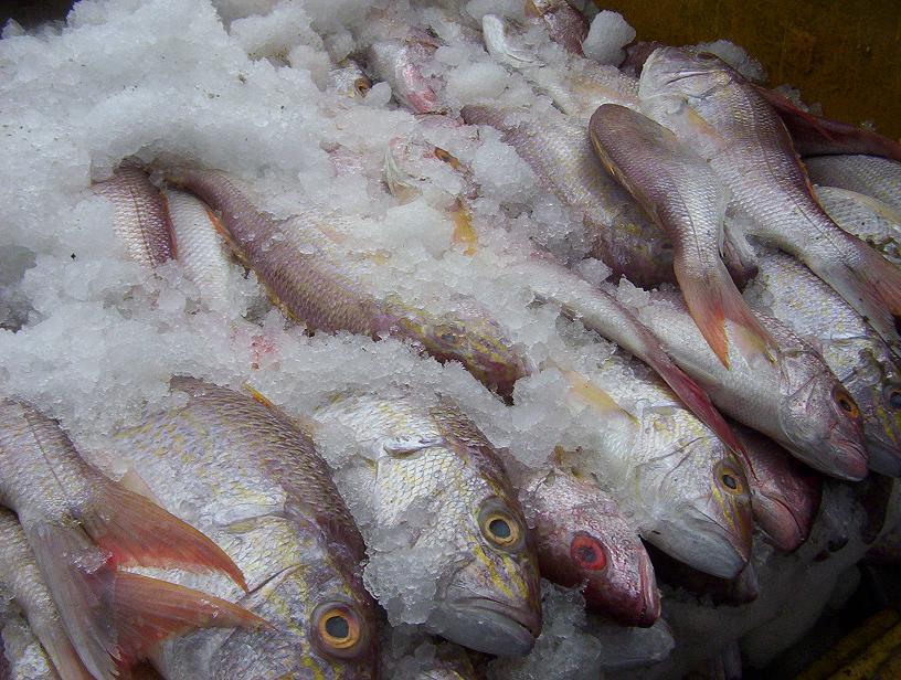 Роспотребнадзор изъял 39 килограммов рыбы