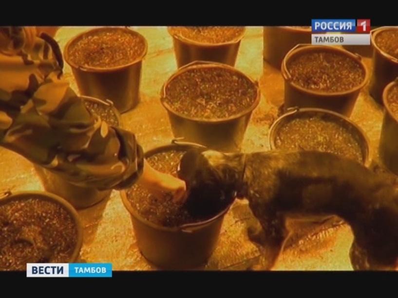 Гражданин Садаковского вырастил вгараже коноплю