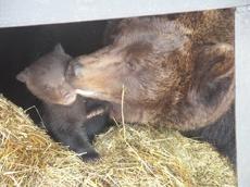 Новорожденный тамбовский медвежонок получил имя