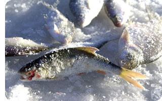 Юные тамбовчане посостязаются в рыбной ловле