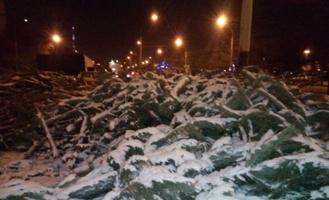 После Нового года на улицах Тамбова остались валяться полторы тысячи непроданных ёлок