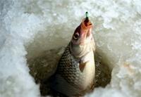 Рыбачить можно будет за 500 рублей в год