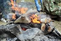 Летняя прогулка по лесу может обойтись россиянам в 1 тысячу рублей