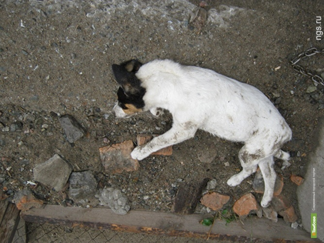 Тамбовские власти ответили защитникам животных