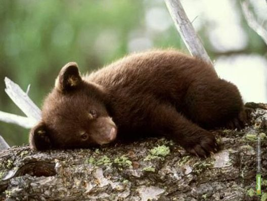 В зоопарке Тамбова родился медвежонок