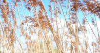 С полей Тамбовщины собрали уже 750 тысяч тонн зерна
