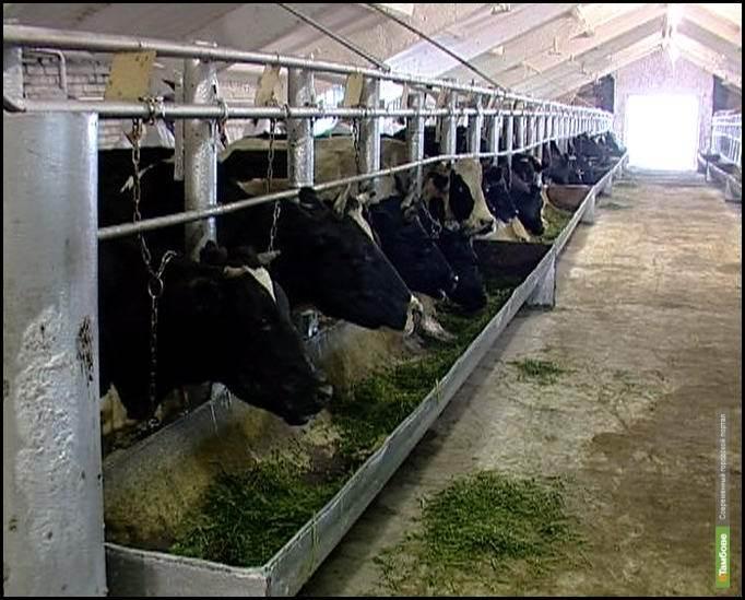 Тамбовским коровам построят новый дом