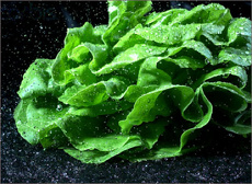 Хит-парад самых ядовитых продуктов возглавил салат