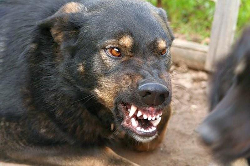 Ситуация по бешенству животных в области остаётся неблагополучной