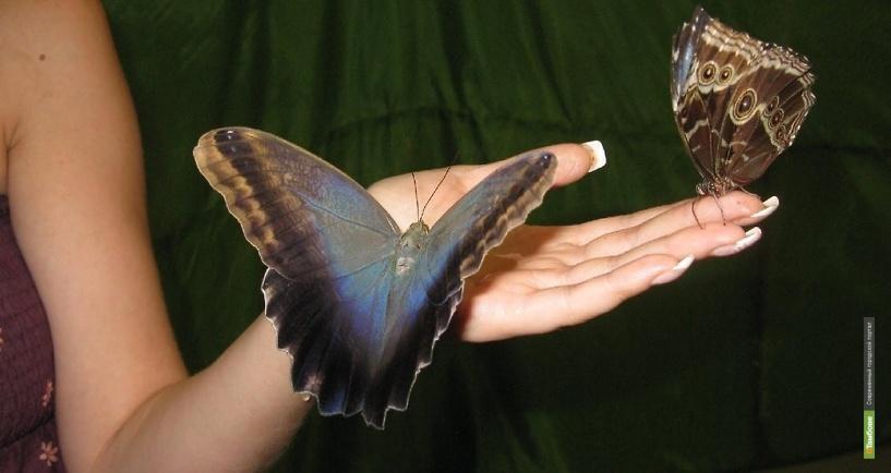 В зоопарке ТГУ поселились гигантские тропические бабочки