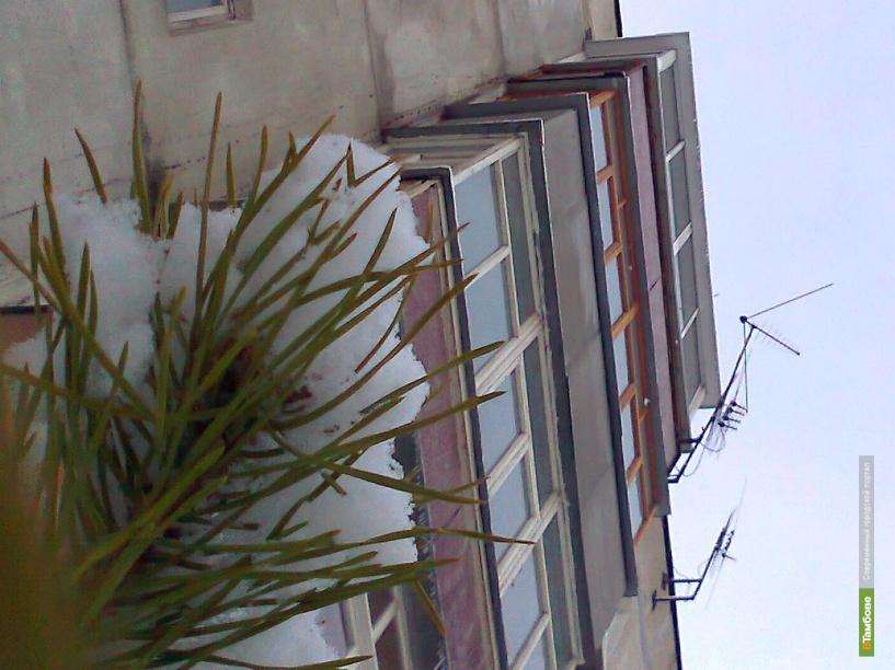 У тамбовчан под окнами «выросли» елки