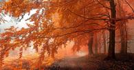 В Тамбове откроется выставка «Осенний вернисаж»