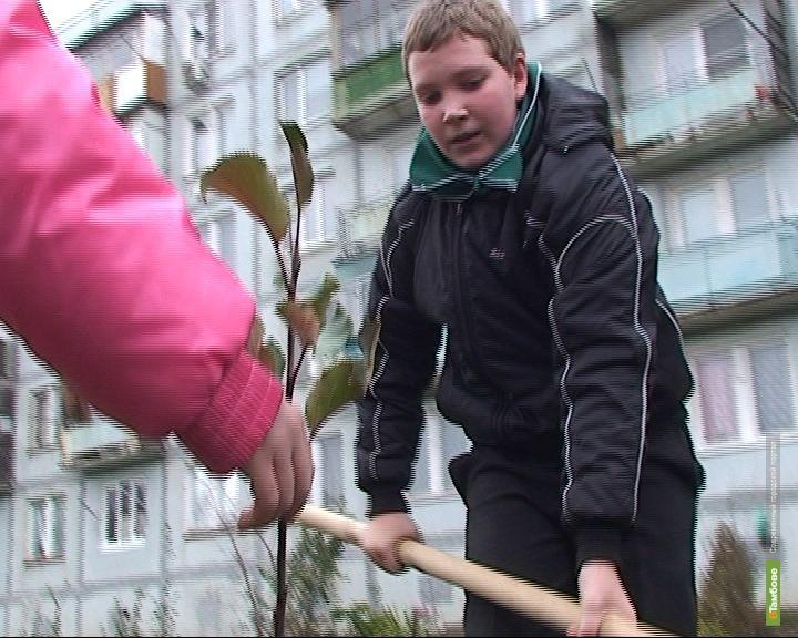 На Тамбовщине станет на 30 тысяч деревьев больше