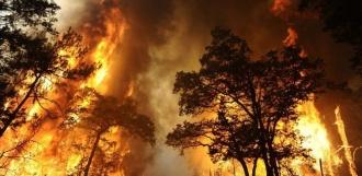 В 2017 году пожары в области нанесли ущерб в 40 миллионов рублей