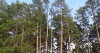 Александр Бобров предложил привести в порядок Архиерейский лес