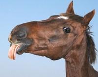 На тропу борьбы с табаком минздрав выводит Коня Долбака