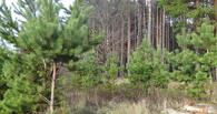 На территории Тамбовщины организуют «Лесные экспедиции»