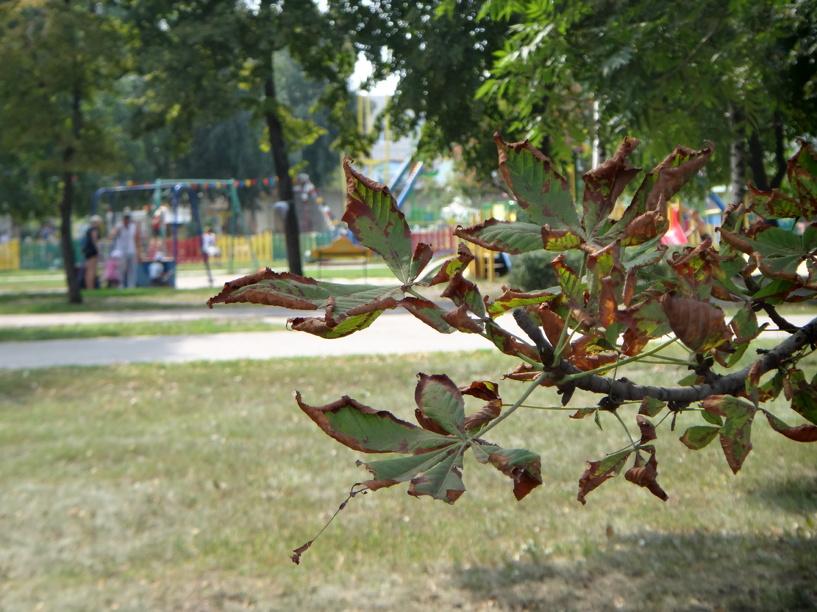 С начала весенне-летнего сезона клещи покусали более 800 тамбовчан