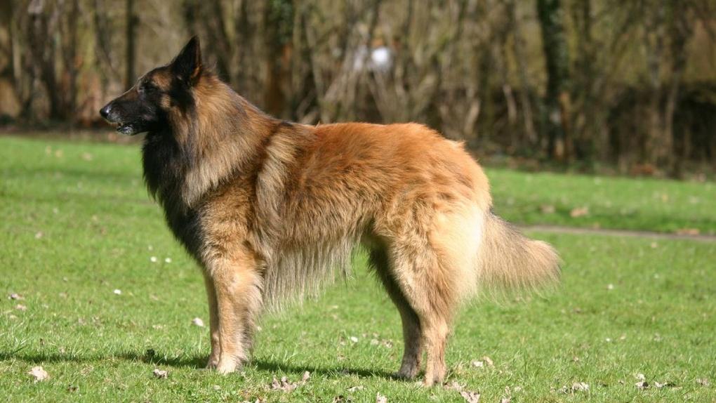 Тамбовское УМВД закупит служебных собак на 780 тысяч рублей. Список