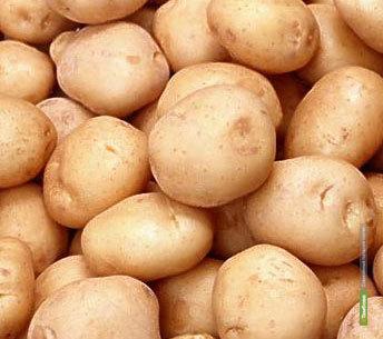 На тамбовских рынках продолжается сезонное снижение цен