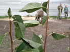 На набережной Тамбова разбили фруктовый сад