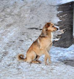 В Моршанске избавятся от бездомных животных