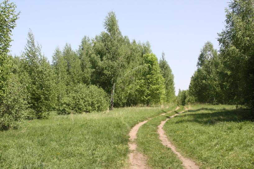В регионе проводятся работы по лесовосстановлению